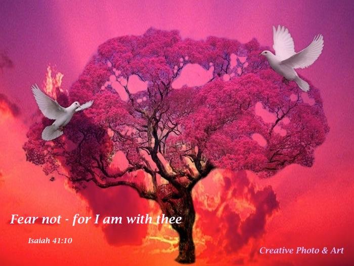 Fear not Isaiah 41 10